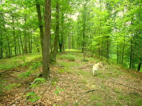 Ashton Woods WV Lot                 103