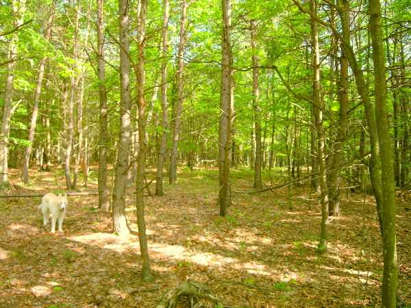 Ashton               Woods WV - Lot 150